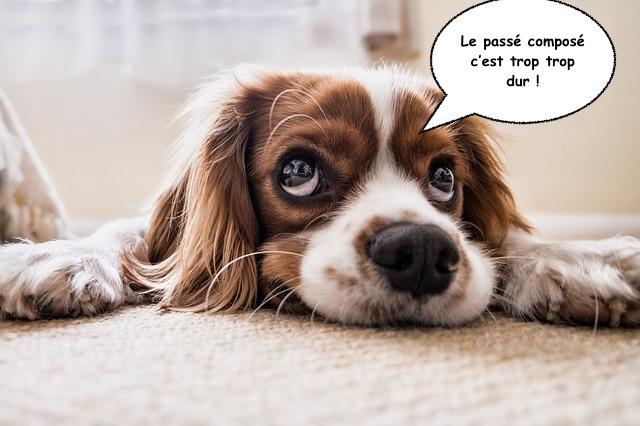 langue française passé composé